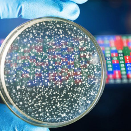 NEW online course: Bacterial Genomes: Accessing and Analysing Microbial Genome Data
