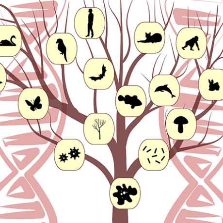 Artistic representation of a phylogenetic tree